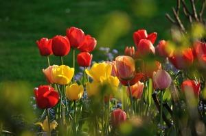 flower-198538_640